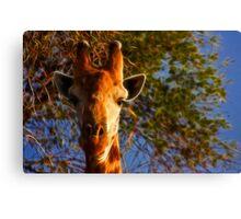 Kruger Giraffe Canvas Print