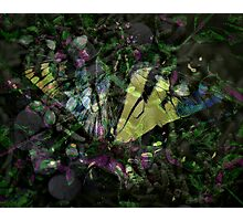 colorful butterfly art Photographic Print