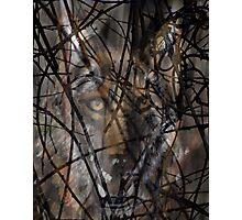 Coyote Wild Photographic Print