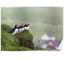 Three Puffins Poster