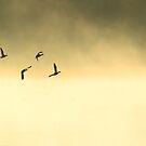 ducks at dawn over Beliar by nadine henley