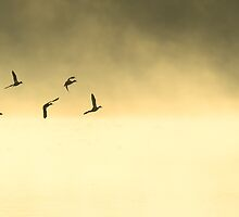 ducks at dawn over Beliar by nadine henley