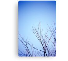 Little Glimmer Canvas Print