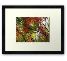 pine brush Framed Print