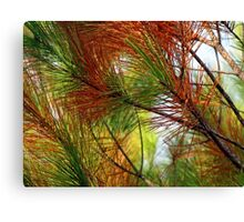 pine brush Canvas Print