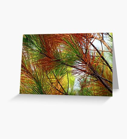 pine brush Greeting Card