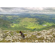 The Fell Terrier Photographic Print
