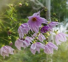 Tree Dahlia (Dahlia imperialis) by Elaine Teague