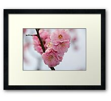 Close up of Cherry Blossoms in a Japanese Garden, Tokyo, Japan Framed Print