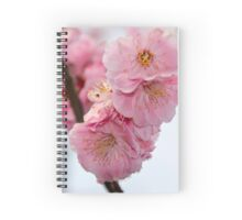 Close up of Cherry Blossoms in a Japanese Garden, Tokyo, Japan Spiral Notebook