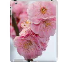 Close up of Cherry Blossoms in a Japanese Garden, Tokyo, Japan iPad Case/Skin