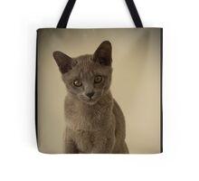cute kitten Burmese quizzical look Tote Bag