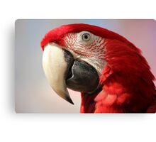 Green wing macaw portrait Canvas Print