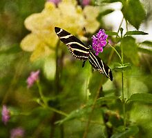Zebra Butterfly on Pink Flower by Jacqueline Wilson