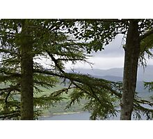 Trees Overlooking Loch Ness Photographic Print