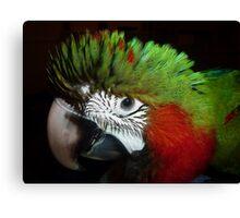 Jubilee macaw portrait Canvas Print