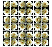 White3 Photographic Print
