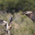 Juvenile Raptor Play by byronbackyard