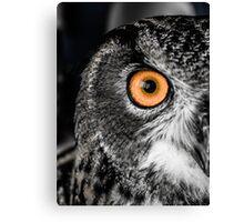 An Owl's Stare Canvas Print