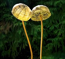 Two Little Shrooms by Susie Peek