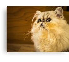 Grumpy Cat is Grumpy Canvas Print