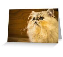 Grumpy Cat is Grumpy Greeting Card