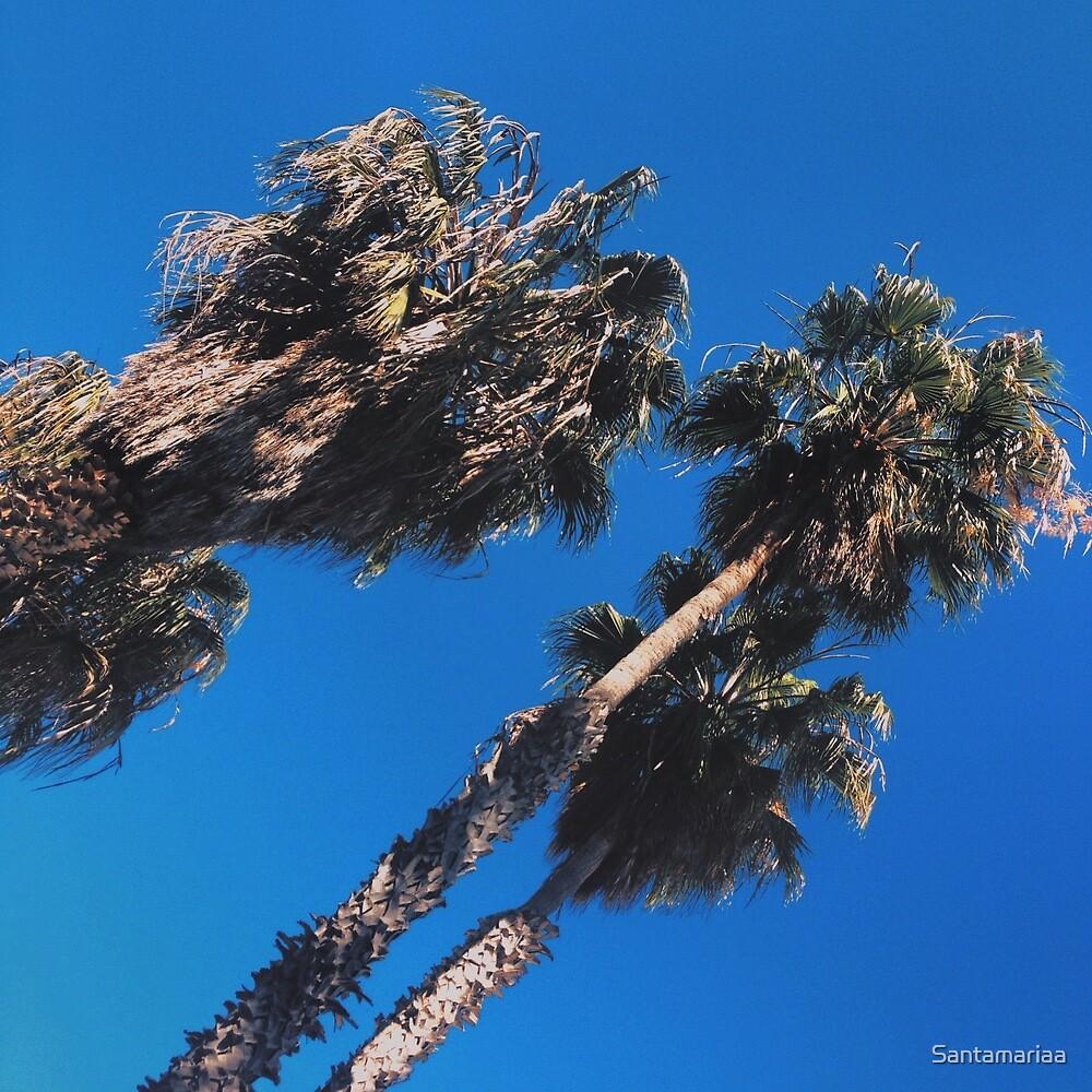 Palm trees by Santamariaa