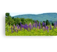 A Sign of Summer Canvas Print