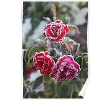 Frosted Roses Poster