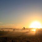 Foggy Sunrise by Jenelle  Irvine