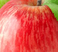 Red and green apple Sticker