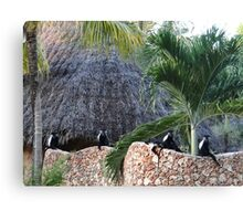 Colobus Monkey resting on a wall Canvas Print