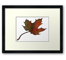 Maple Leaf in Autumn, Hand Drawn, Color Pencil Art Framed Print