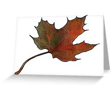 Maple Leaf in Autumn, Hand Drawn, Color Pencil Art Greeting Card
