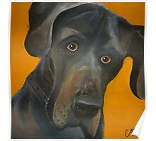 Dudley the dog Poster