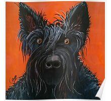 Fergus the Scottish Terrier Poster