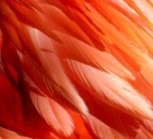 Flamingo Feathers Sticker