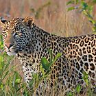 The Vomba young male by jozi1