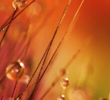 Water Drops on Blades of Grass Colorful Nature Sticker