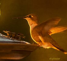 Dinning at Sunset a Hummingbird by browncardinal8