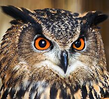 European Eagle Owl, Hypnotic eyes! by Dave  Knowles