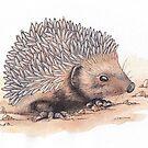 Hedgehog by shiro