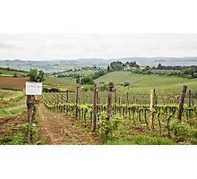 Tuscany Vineyard Photographic Print