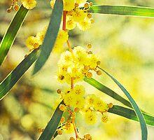 Sunshine on a Tree by Linda Lees