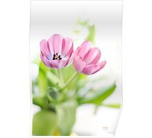 Pink Tulips Drenched In Light Poster