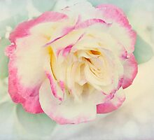 Pastel Rose by Elaine Teague
