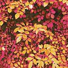 Foliage Hues - Orange and Pink by Shawna Rowe
