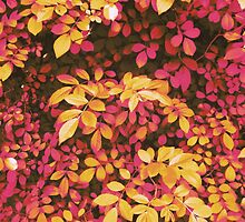 Foliage Hues - Orange and Pink by Shawna Rowe