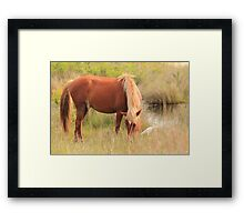 Wild Spanish Mustang in the Dunes Framed Print