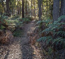 Walking Track through a stand of peppermints leading to a Historic Site by fotosic